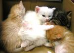130618_kitty5.jpg