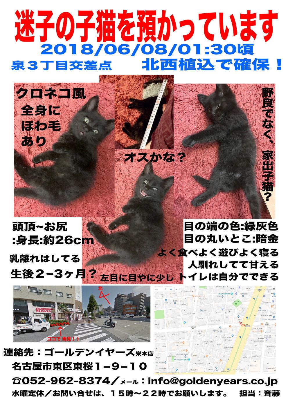 KittyWanted_BL_web.jpg